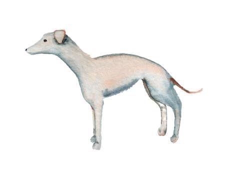 Watercolor image of italian greyhound