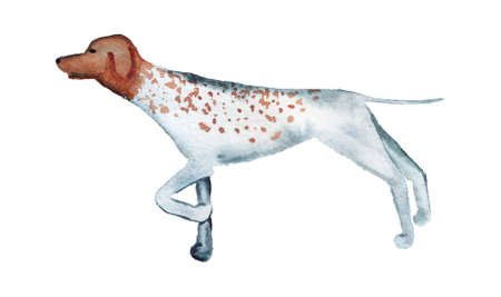Watercolor image of pointer dog.