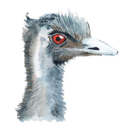 Realistic portrait of african ostrich Imagens