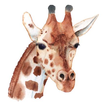 Realistic portrait of giraffe. Imagens