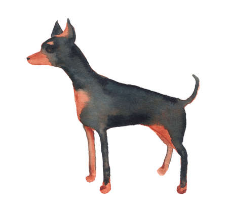 Watercolor image of English Toy Terrier