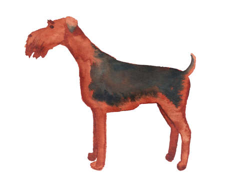 Watercolor image of Airedale Terrier Imagens