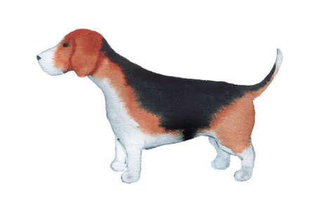 Watercolor image of Beagle.