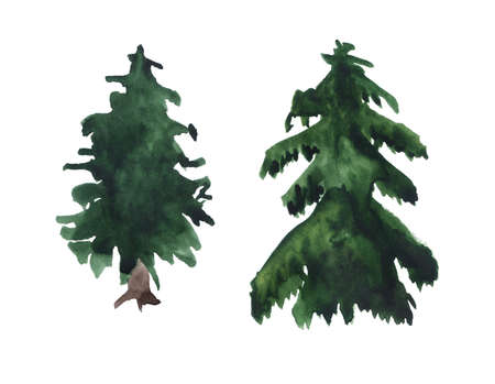 Two watercolor fir trees. Imagens