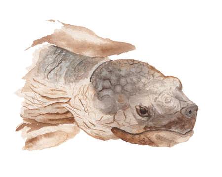 Realistic portrait of african tortoise Imagens
