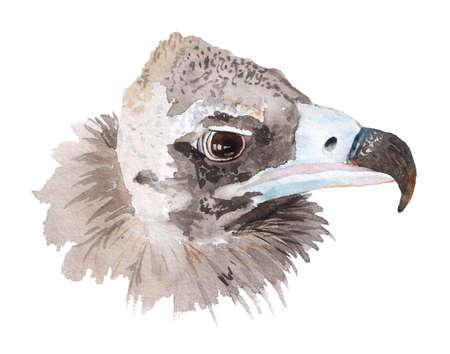 Watercolor portrait of black vulture. Imagens