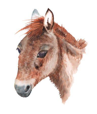 Realistic portrait of mongolian wild horse