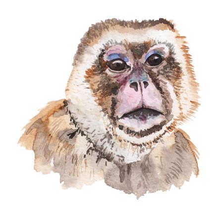 Realistic watercolor portrait of snow monkey.