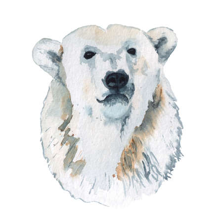 Watercolor portrait of polar bear Imagens