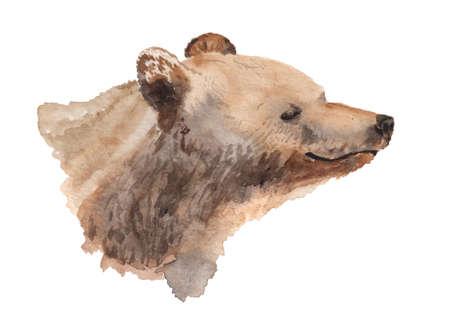 Watercolor portrait of brown bear