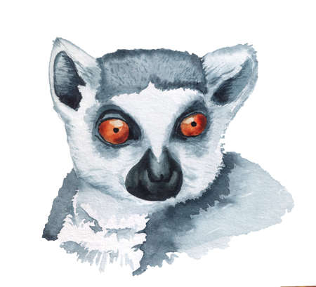 Realistic watercolor portrait of lemur. Imagens