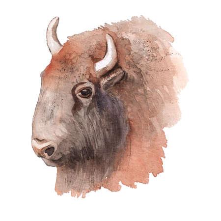 Realistic watercolor portrait of bison. Imagens
