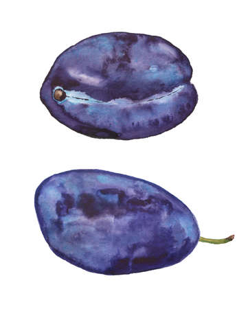 Two ripe blue plums Imagens - 158910930