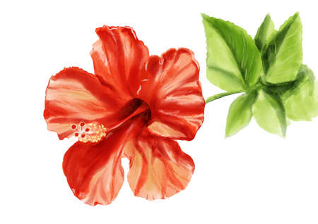 Realistic illustration with red hibiscus flower