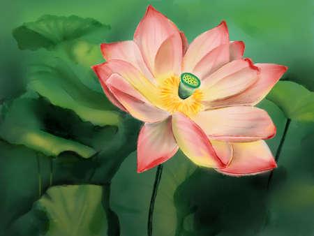 Pink flower of lotus