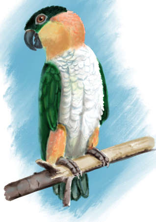 Black-headed parrot. Realistic hand drawn illustration of tropical bird on blue background.