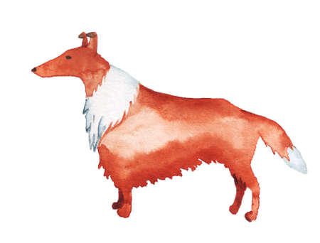 Watercolor image of Rough Collie dog isolated on white background. Hand drawn cartoon illustration