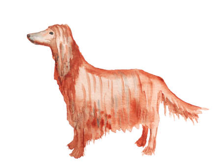 Watercolor image of afghan hound