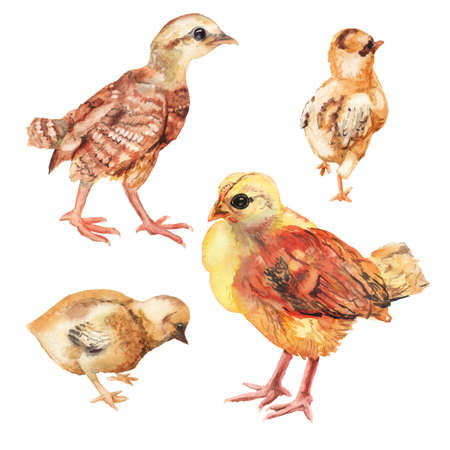 Set of watercolor images of chickens.
