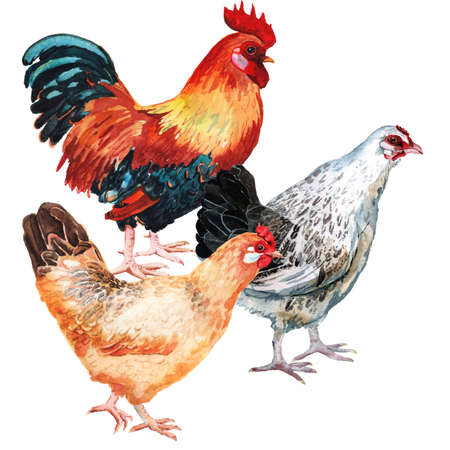 Watercolor image of cock and two hens Imagens