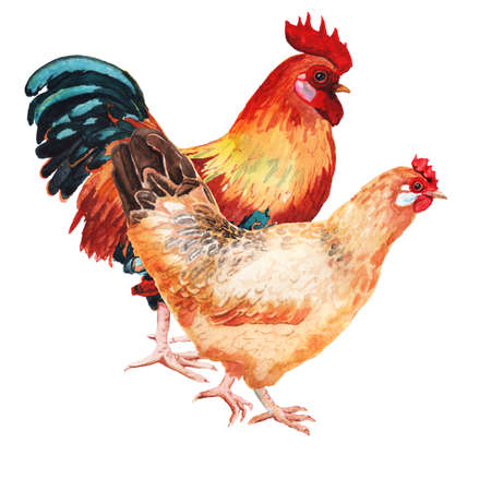 Watercolor image of cock and hen. Imagens