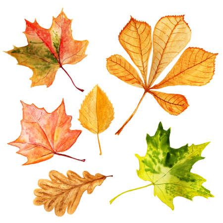 Set of watercolor autumn leaves.