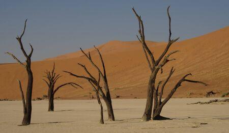 arboles secos: �rboles muertos en Deadvlei, Sossusvlei, Namibia