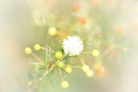 gorgeous little clump of cute natural wildflowers in bloom. fragile, dainty and pretty ball of colour natural and untouched. fairy wonderland or dreamy floral background. Banco de Imagens