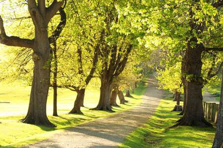 Beautiful green oak trees lining a path that leads uphill to an unkown destination. Spring morning or evening with light airy atmsophere. Banque d'images