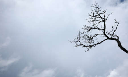 A ragged old dead barren tree stump and branches reaching up into a gloomy ominous sky with peak of blue behind. Clouds and spooky silhouette of a tree with lots of space.