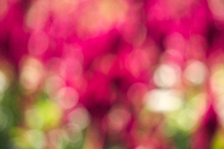 An amazingly beautiful, special flower bokeh, lens blur effect, for a lovely Valentines Day remembrance; a landscape shot, in a stunningly gorgeous garden park in Bangkok, Thailand.