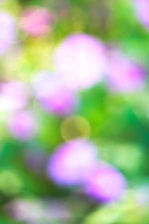 An amazingly beautiful, special flower bokeh, lens blur effect, for a lovely Valentines Day remembrance; a portrait shot, in a stunningly gorgeous garden park in Bangkok, Thailand.