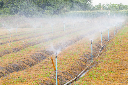 sprinkle system: Automatic sprinkler irrigation system watering in the vegetable farm.