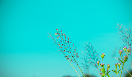 colorful flower grass on background vintage with have space