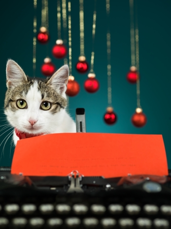 closeup of a cute cat looking in front of her, behind an antique typewriter with a red paper in it on blue background photo