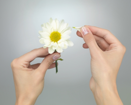 female hands puling petals from a daisy on grey gradient background Stock Photo