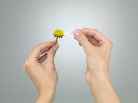 games of chance: female hands puling the last petal from a daisy on grey gradient background Stock Photo