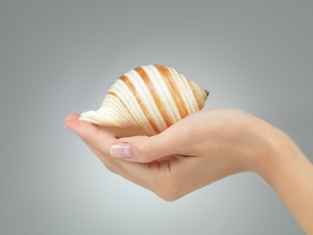 gentle dream vacation: female hand holding in her palm a beautiful spiral seashell on grey gradient background Stock Photo
