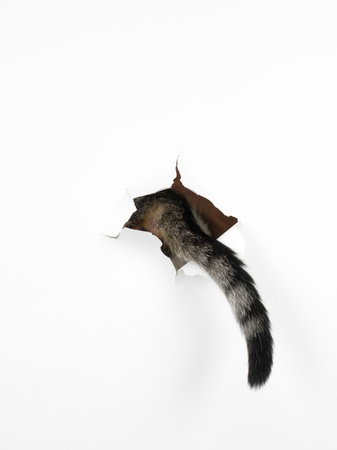 a cats tail coming out through a hole in a white paper, isolated
