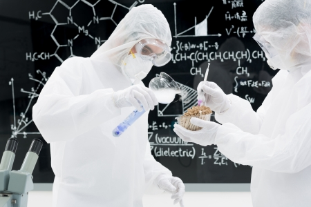 psilocybin: side-view of two people in a laboratory testing and applying genetic techniques on mushrooms with a blackboard on the background Stock Photo