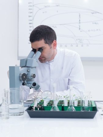 worktable: close-up of a scientist in a chemistry lab analyzing under microscope on a worktable with seedlings and lab tools and a white-board on the background Stock Photo