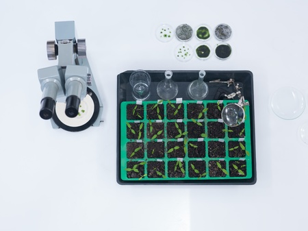 globalwarming: close-up of laboratory tools and seedlings on a worktable in a chemistry lab Stock Photo