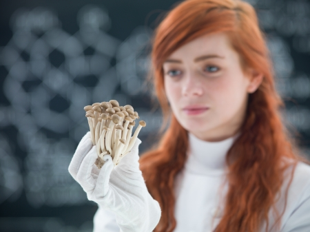 psilocybin: macro of a bunch of mushrooms holded in hands by a preety face student in a chemisty lab with a blackboard on the background