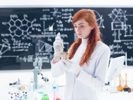 mycology: general-view of a student in a chemistry lab injecting mushrooms around a lab table with colorful liquids and a blackboard on the background