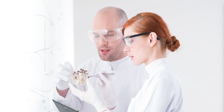 hallucinogen: close-up of a teacher and his curious student in a chemistry lab analyzing a bunch of mushrooms in front of a whiteboard