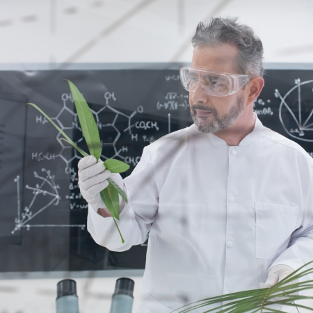 globalwarming: close-up of scientist in a chemistry lab analyzing leafs around lab tools and with a blackboard with formulas on the background Stock Photo