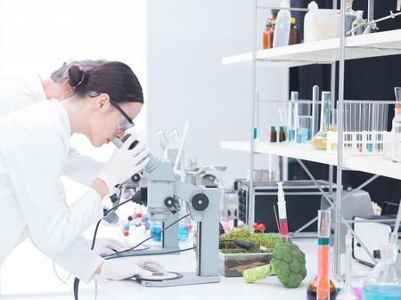 brocoli: en vista lateral de dos científicos en un análisis de laboratorio de química bajo el microscopio sobre una mesa de laboratorio en torno a herramientas de laboratorio Foto de archivo