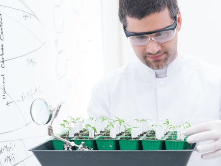close-up of a man in a chemistry lab conducting a plant experiment on a lab table with lab tools and a whitebpoard on tha background photo