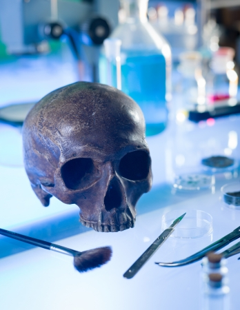 close-up of ancient human skull set up on a table in a forensics laboratory Stock Photo - 20700480