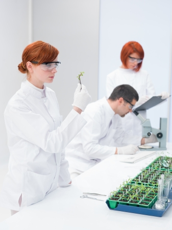 Scientists in a genetic engineering laboratory monitoring the development of genetically modified seedlings from an agricultural crop or biofuel